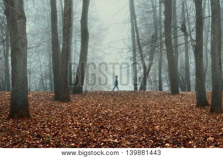 Autumn nature -foggy autumn view of autumn park in dense fog with ghostly silhouette. Autumn landscape with autumn trees and yellow dry fallen leaves. Autumn park in dense autumn fog.