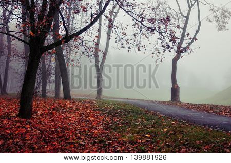 Autumn nature -misty autumn view of autumn park alley in dense fog - foggy autumn landscape with bare autumn trees and orange fallen leaves. Autumn alley in dense autumn fog. Soft filter applied.