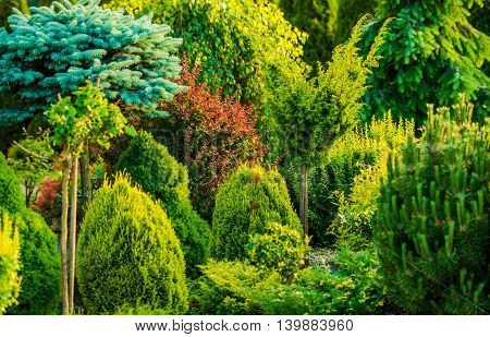 Beautiful Garden Closeup Photo. Backyard Garden in Summer. Many Different Type of Plants.