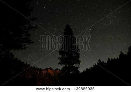 A single black tree silhouette in the focal point in front of a clear night sky. The horizon is still lit up by a remainder of sunlight long after sunset. This residual light accentuate the sharp treetops of a coniferous forest and a red cliff.
