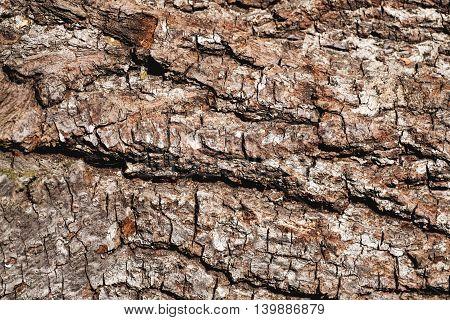 Wood Bark Background Texture