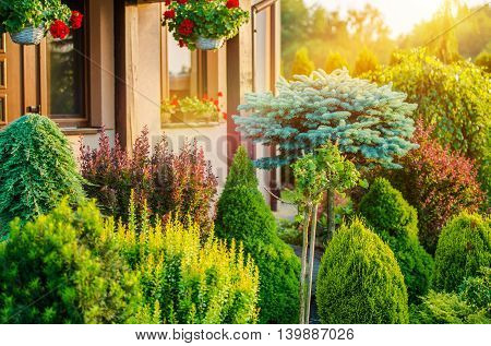 Beautiful Rockery Garden in Front of House. Summer Vegetation in the Residential Garden.