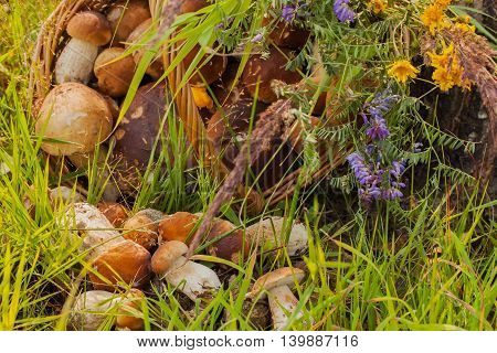 Wicker basket with Porcini mushrooms and other mushrooms and forest flowers bouquet on the forest background in the green grass