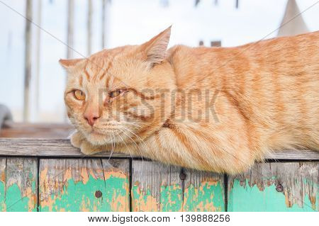 Beautiful red stripped cat lies on the fence