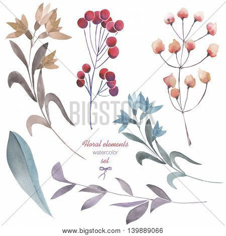 A floral set with the isolated watercolor branches, flowers and berries, hand drawn on a white background, for self-compilation of the bouquets and ornaments