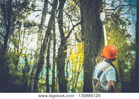 Unhealthy Tree Branches Cutting by Professional Forestry Worker.