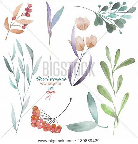 Floral set with the isolated watercolor branches and berries, hand drawn on a white background, for self-compilation of the bouquets and ornaments