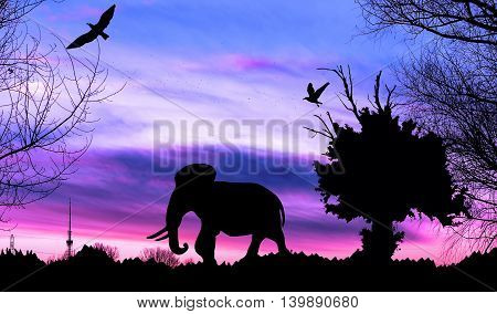 Jungle With Old Tree, Birds And Elephant On Purple Cloudy Sunset Background