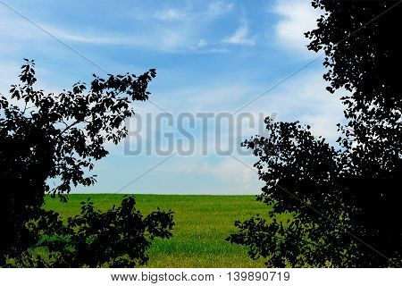 Silhouette Of Tree Leaves On Green Meadow And Blue Cloudy Sky Background