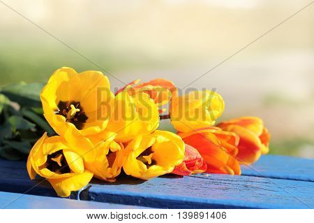 gentle bouquet of tulips lie on a bench in the park / flower meeting
