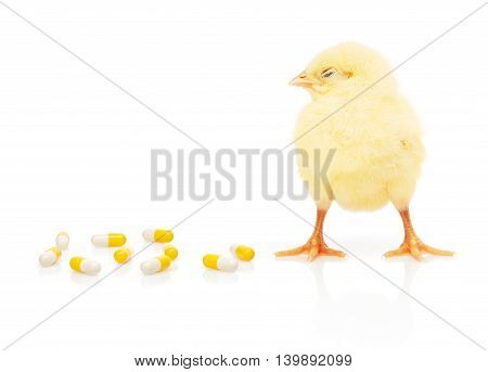Small yellow chicken near pile of yellow and white capsules isolated on white background