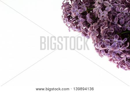 background with a fluffy branch of lilac flowers in the corner of the composition / card with flowers