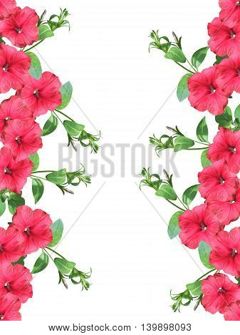 Beautiful floral background with branches of pink petunias