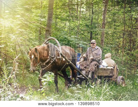 People in a cart with a horse in the forest. Life of Russian village.