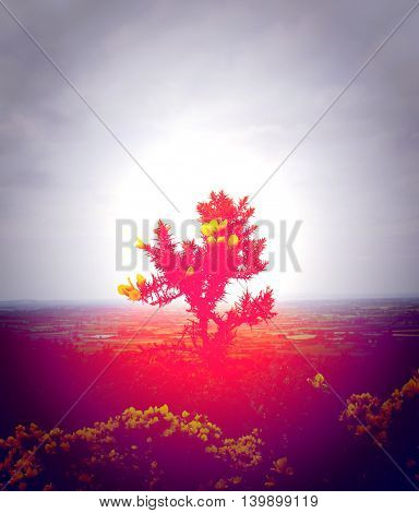A gorse bush illuminated and engulfed in red light stands lone and tall on top of an Irish hill