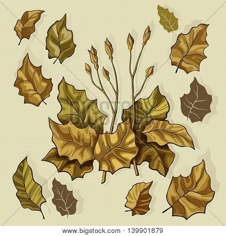 Brown stylized leaves in a bouquet on a beige background with shadow