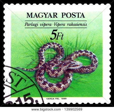 STAVROPOL RUSSIA - JULY 25 2016: a stamp printed by Hungary shows Vipera Rakosiensis (Orsini's viper) Snakes circa 1989