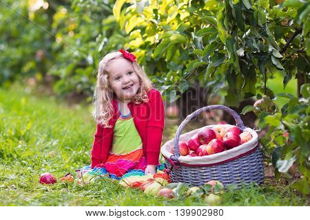 Child picking apples on a farm in autumn. Healthy nutrition.