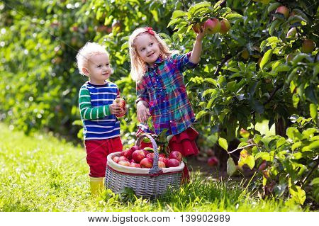 Child picking apples on a farm in autumn. Little girl and boy playing in apple tree orchard. Healthy nutrition.