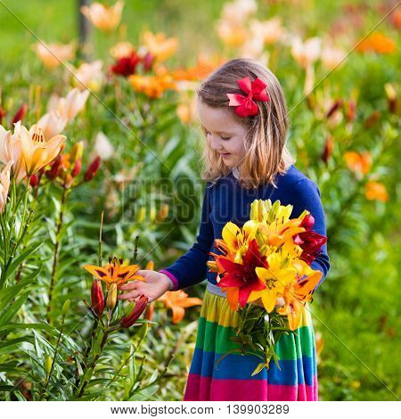 Cute little girl picking lily flowers in blooming summer garden. Child holding lilies bouquet in beautiful flower field. Kid gardening. Lilium plants in flower bed. Preschooler smells picked blossoms.
