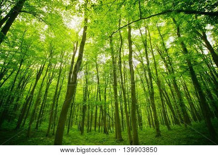 Panoramic view of the forest where are a lot of trees
