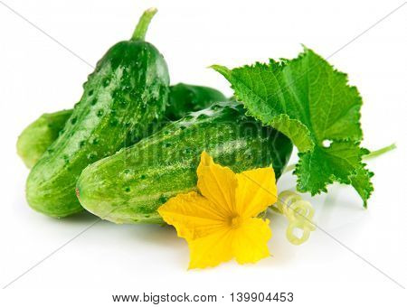 Fresh green cucumber with leaf and flower natural vegetables organic food isolated on white background