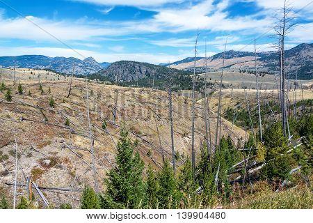 Beautiful Yellowstone National Park Landscape