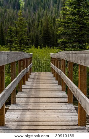 Sturdy Bridge in Pine Forest over a mountain creek