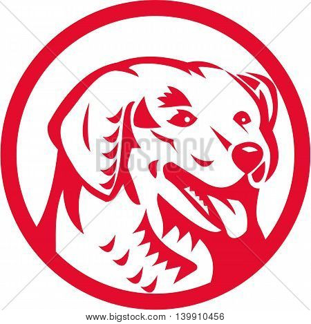 Illustration of a head of a Kuvasz an ancient breed of a livestock dog of Hungarian origin viewed from front set inside circle done in retro style.