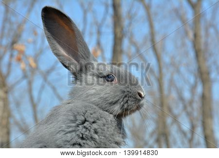 A close up of the young rabbit.