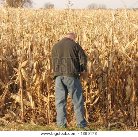 Farmer Checking Crops