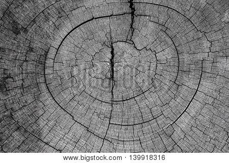 Old cracked stump wood texture background, stump wood texture
