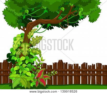 Wooden fence and tropical tree for you design