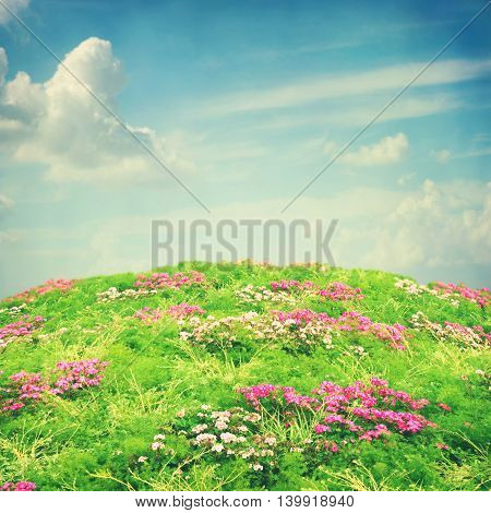 Nature background with flowers and blue sky