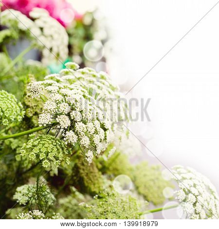 Flower dill spring dreamy background for postcard design
