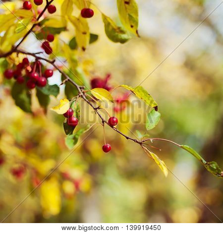 Autumn season berry tree in a park background