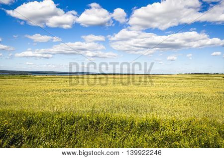 Beautiful bright saturated views of nature meadows and white clouds on a background of blue sky