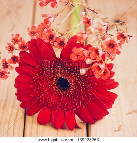 Flower background. Red gerbera daisy close up