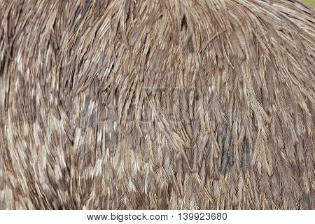 a close up view of emu feathers