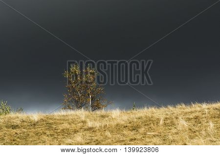 Autumn Landscape with birch trees against a dark background stormy sky. Dramatic view, amazing in nature