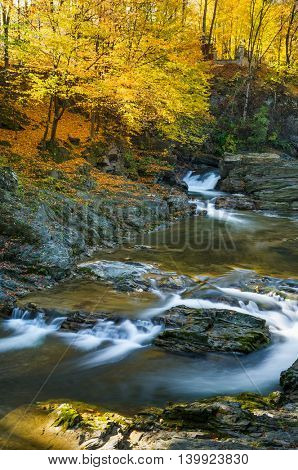 Autumn Landscape with beech forest. Mountain river with cascades and waterfalls. Beauty in nature. Carpathians, Ukraine, Europe