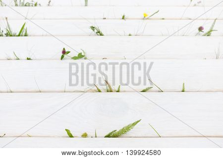 White wood with summer grass and flowers, copyspace for text. Natural and manmade unity