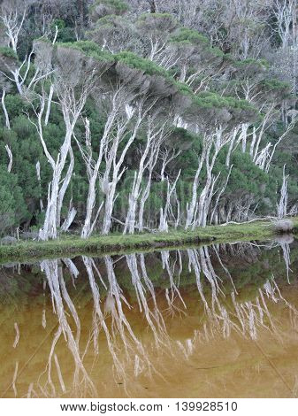 Tree Reflection Tidal River Tea Trees Wilsons Promontory