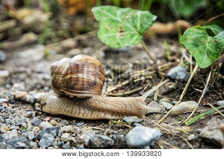 Detail photo of beautiful snail or slug in outdoors. Animal scene. Beauty in nature.