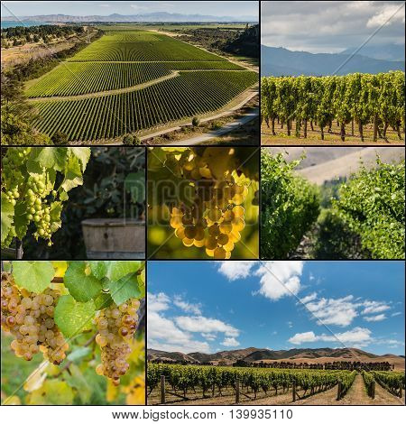 New Zealand vineyards and grapevine pictures collage
