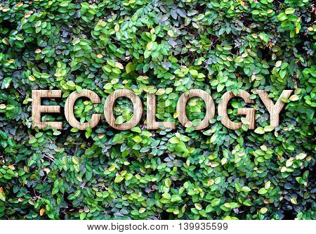 Ecology Made Of Wood Word On Leaves Wall,eco Concept