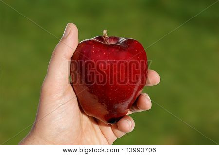 Apple In Hand Against Green