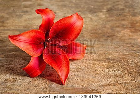 Beautiful lily on wooden background