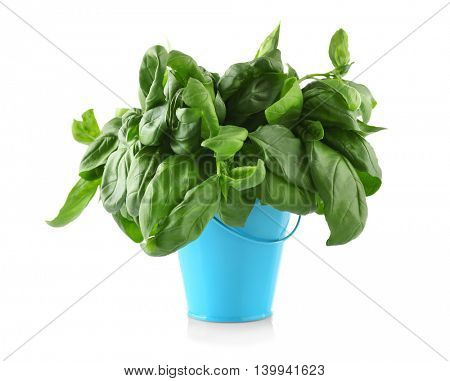 Fresh basil in bucket, isolated on white