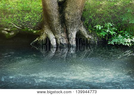 Roots of an old tree in the forest